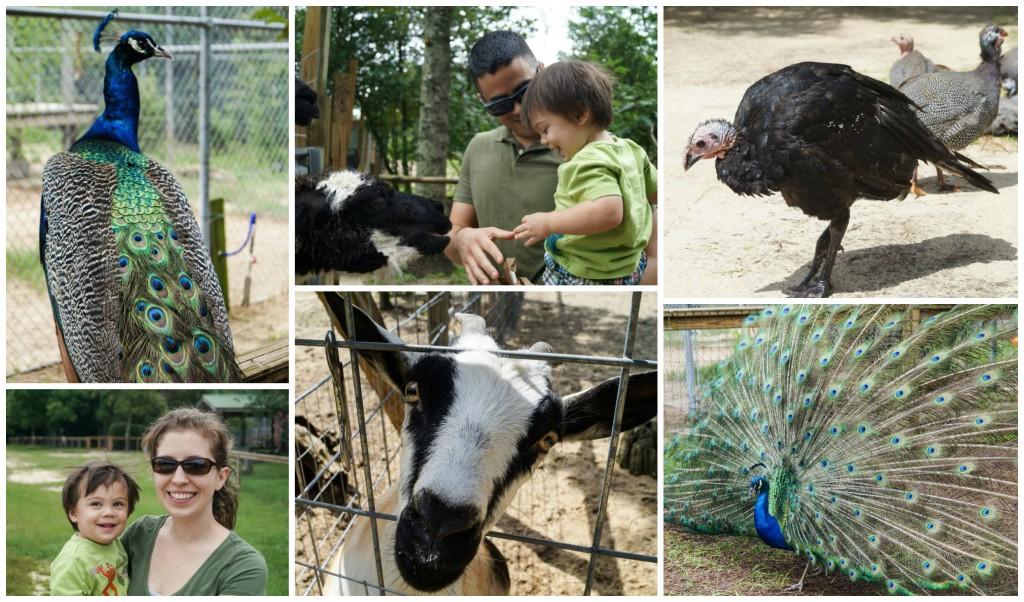 crestview zoo