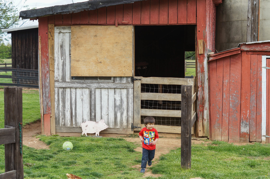 Braehead Farm (30 of 37)