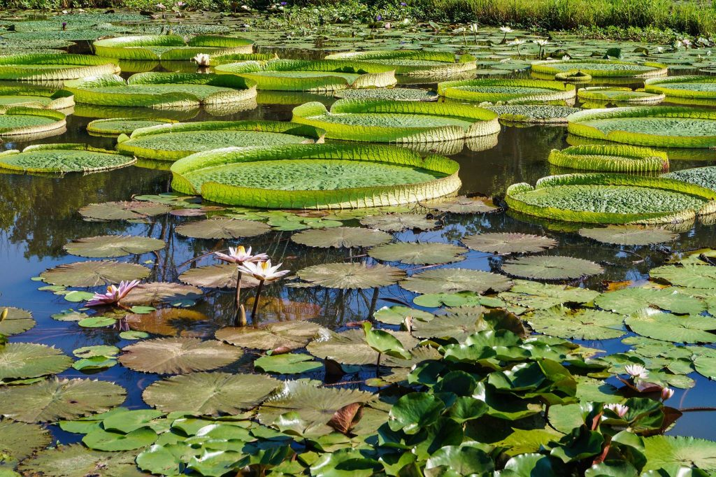 United states national arboretum kenilworth aquatic - Kenilworth park and aquatic gardens ...
